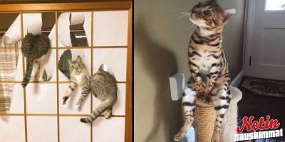 Eläimet ovat oikeita koomikkoja! – Katso hauskat kuvat!