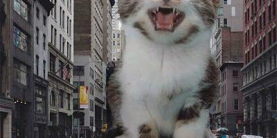 Jättimäisiä kissoja kaupunkiympäristöissä – mitä, jos tämä olisikin totta?