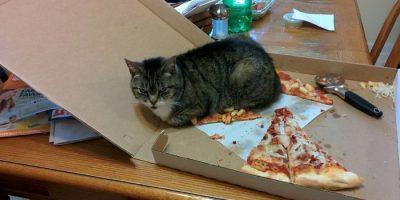 7 todistetta siitä, että kissat ovat pieniä paholaisia.