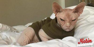 Tämä kisuli näyttää vihaiselta vanhalta mieheltä! – Katso hauska kuvasarja!