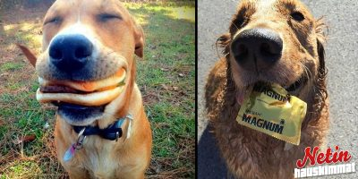 Tuoko koirasi sinulle leluja? – Nämä koirat toivat paljon muutakin!