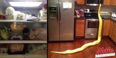 Onko vastassasi ollut kummallisia näkyjä kotiin tultuasi? – Näillä ihmisillä on!