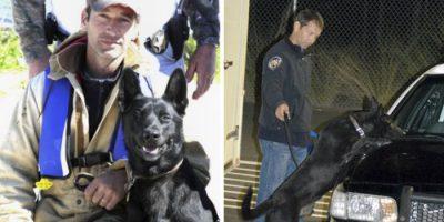 Jengi raahasi poliisin metsään tappaakseen hänet – ihmeellinen koira pelasti hänet!