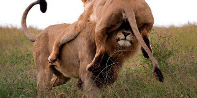 Eläimet, jotka nauttivat toistensa päällä olemisesta – 8 huvittavaa kuvaa