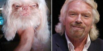 Kun koirat muistuttavat tunnettuja henkilöitä – kuin kaksi marjaa!
