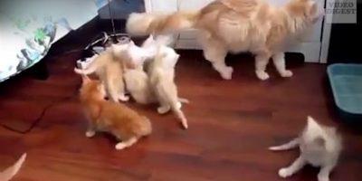 Kissat täydessä paniikissa – naurat takuulla kippurassa!