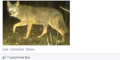 Facebook ei ole aina viisaiden ihmisten paikka – nämä kuvat todistavat sen