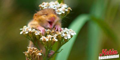 Näistä kuvista löytyy syy sun hymyyn! – Katso 10 ihastuttavaa kuvaa!