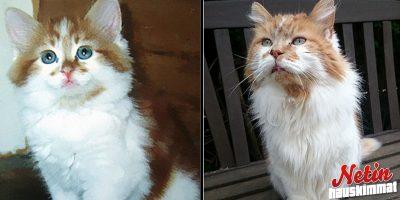 Maailman vanhin kissa 30 vuotta! – Tässä on Rubble!