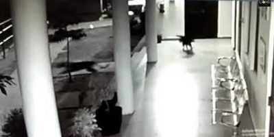 Koira hyökkää leopardin kimppuun sen yrittäessä napata koiranpennun – melkoinen äidinvaisto!