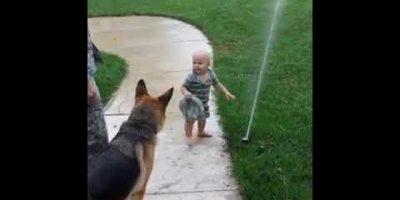 Koira suojelee lasta sprinkleriltä – katso hulvaton video!