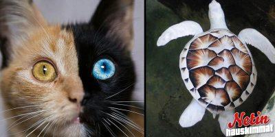 Luontoäiti valitsi näille eläimille hauskat värit! – Katso 14 suloista kuvaa!