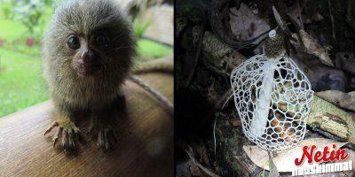 Kaikkea kummaa löytyy viidakosta! – Tiesitkö näiden kavereiden olemassaolosta?
