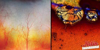 Tiesitkö että nämä näyttävät tältä mikroskoopin alla? – Katso 7 kuvaa!