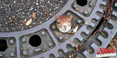 Eläimet kiipelissä! – Katso 10 hämmentävää kuvaa!