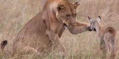 Eläimet, jotka pelastavat toisen eläinlajin yksilöitä – niin kaunista!