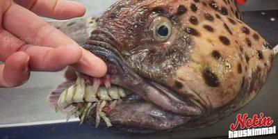 Mitä kaikkea merten syvyyksistä voikaan löytyä! – Näitähän jo säikähtää!