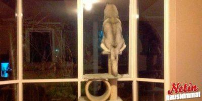 Nämä koirat kuvittelevat olevansa kissoja! – Katso hupaisat kuvat!