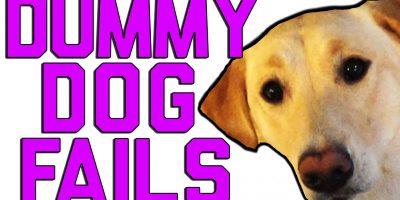 Koiramokat naurattavat aina – katso mokavideo!