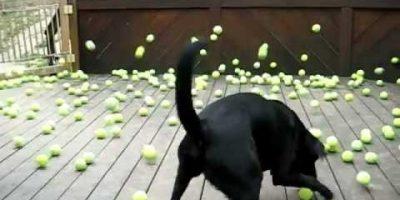 Koiran unelma käy toteen! Kymmeniä tennispalloja!
