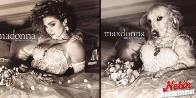 Tämä koira matkii Madonnan kuvia! – Tulos on aivan uskomaton!