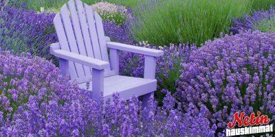 Miten päästä eroon hyttysistä? – Istuta näitä kasveja puutarhaan!