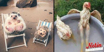 Näin eläimet selviytyvät helteessä! – Katso 14 suloista kuvaa!