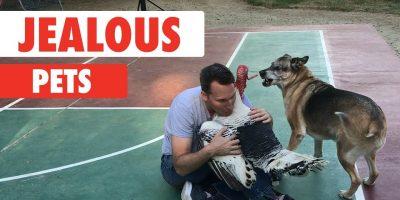Kateelliset eläimet – hulvattomia lemmikkejä!