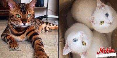 Oletko koskaan nähnyt yhtä suloisia kissoja? – Sydänhän tässä sulaa!