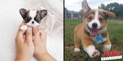 Sydän on varastettu! – Nämä suloiset koirat veivät sen!