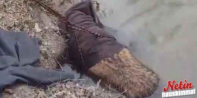 Mies luuli pelastavansa majavan! – Yllätys olikin suuri kun totuus paljastui!