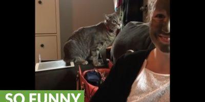 Omistaja laittoi mutanaamion naamalleen – kissan reaktio on saanut monet nauramaan!
