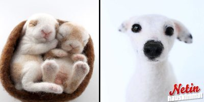 Upeat huovutetut eläimet! – Aivan kuin elävät!