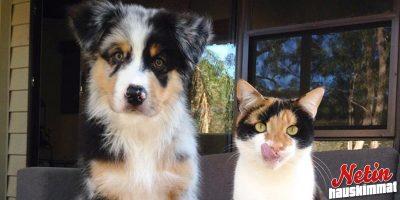 Kaksoset? – Nämä eläimet näyttävät hyvin paljon toisiltaan!
