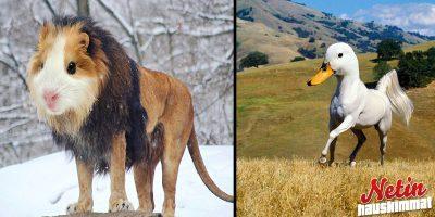 Erikoiset eksoottiset eläimet! – Nyt on jännää photoshoppausta!