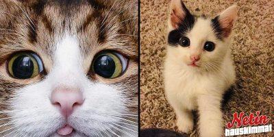 Kissat ovat suloisimpia! – Nämä 14 kuvaa todistavat sen!