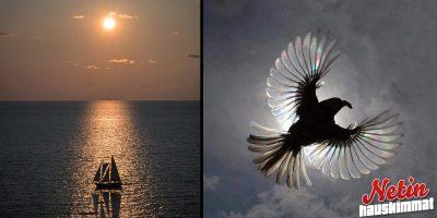 Nämä kuvat mykistävät! –  Hipovat jo täydellisyyttä!!