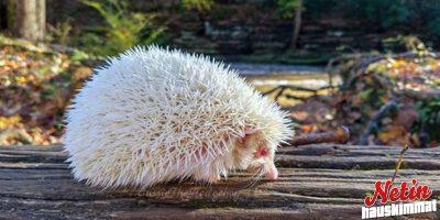 Nämä 15 albiinoeläintä ovat kuin toiselta planeetalta! – Katso ja ihastu!