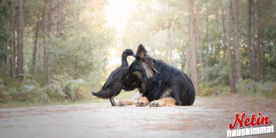 Odottamaton ystävyyssuhde – Koira ja ankka kaverustuivat!