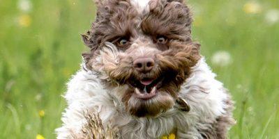 Nämä kuvat antavat juokseville koirille aivan uuden merkityksen