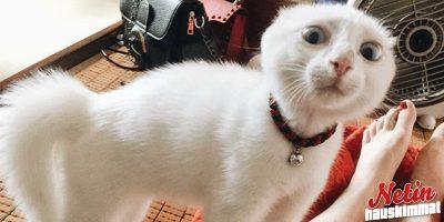 Kun maukaiset kissallesi! – Katso kissojen koomiset ilmeet!