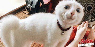 Kun kissa maukuu ja sille vastaa – Näyttääkö sinun kissasi yhtä hämmentyneeltä?