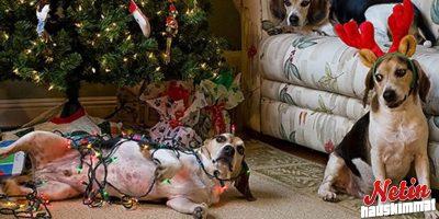 Lemmikit vastaan joulukuuset! – Näyttääkö teillä tältä?