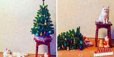 Lemmikit eivät innostuneet joulusta! – Katso paljon puhuvat ilmeet!