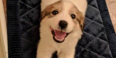 Hylätyt eläimet saivat uuden kodin – katso koskettavat kuvat