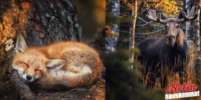 Suomalaiset satumetsät! – Katso 25 upeaa kuvaa!