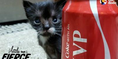 Superpieni kissa oli vain lusikan kokoinen kolme viikkoa vanhana – katso ihana video!