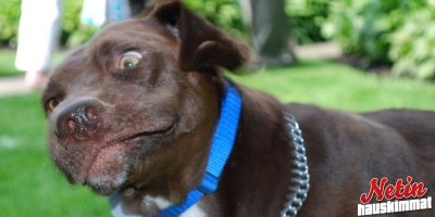 Miltä koirat näyttävät kun ne aivastavat? – Se selviää tässä kuvasarjassa!