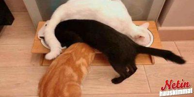 Kissat ovat erikoisia – Mutta kuitenkin niin ihania!