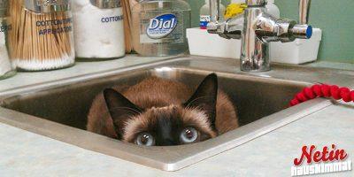 Kissat eläinlääkärissä! – Löysivät loistavat piilopaikat!